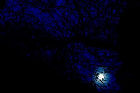 moon_tree2