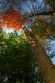 treeunder