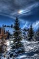 Rainbow pines