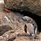 penguin_1753