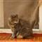 IMGP5510 il gatto