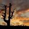 IMGP9295  Baum mit Himmel