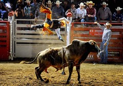 Bull Rider Being Launched