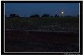 Field with Moon at Dawn
