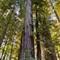 Redwood Stitch