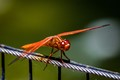 Red Dragon Fiy-3799