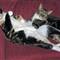 CATS WEB 2
