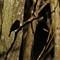 120_Frejufe_Mar014_EritachusRubecula_crop2