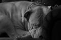 Let sleeping dogs lie....