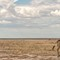 Grazing Giraffes Out in a Meadow in the Afternoon at Etosha National Park DEC 3 2016 NAMIBIA (1 of 1)