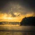 Hawk on the Lake