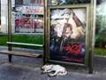 A persian dog takes a nap at a spartan bus stop