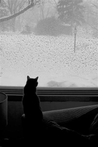 Rushmore contemplating the snownami