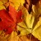 Palette of colors of autumn-1