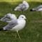 SeagullGroundSide1280_IMG_2252