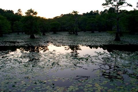 Caddo Lake, Marshall Texas, 7-10-2010