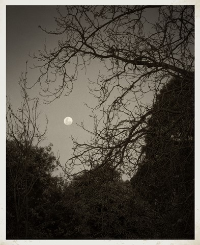 Moonrise-antique-Vig2