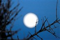 Moon... branch.