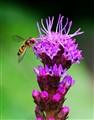 I like violet 2