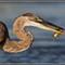Blue Heron 2012 August 6