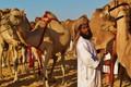 Camel Vendor