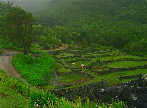 Ancient Hillside Gardens
