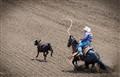 Roping the Calf - Salinas Rodeo