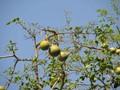 A Triad of Fresh Juicy tropical fruits