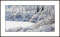 Toronto Ice Storm 2013 (7)
