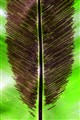 Leaf Lineage