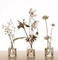 Sampler of Spring Garden Flowers
