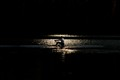 Midnight Rower