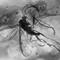 2017 Amber 003 Feb Diptera Nematocera IV