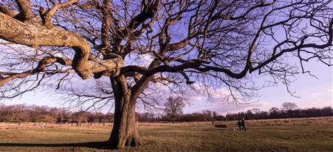 Bushy Park Tree Panorama_3000px