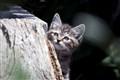 """Feral Kitten """"Bird"""" watching?"""
