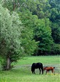 Horse Family Outing