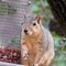 Squirrel 0271