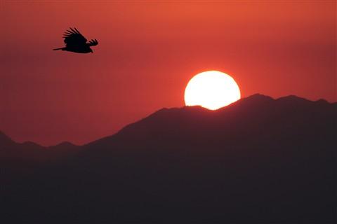 Sunset in the Countyside III
