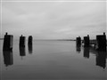 Calm Water of the Maryland Eastern Shore
