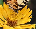 Pollination in Yellow