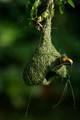 Best Nest Weaver