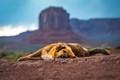 Navajo Dog-3631