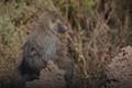 Taken in Serengeti desert