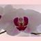 Flower_8x10_LDP0447
