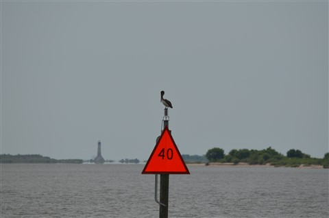 pelican on a channel marker