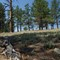 Florissant Fossil Beds National Park Colorado