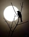 Blackbird (Beatles Song)