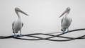 'Birds on wires'