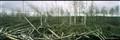Carboniferous landscape - Russian bog