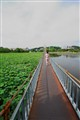 Walk on the Bridge